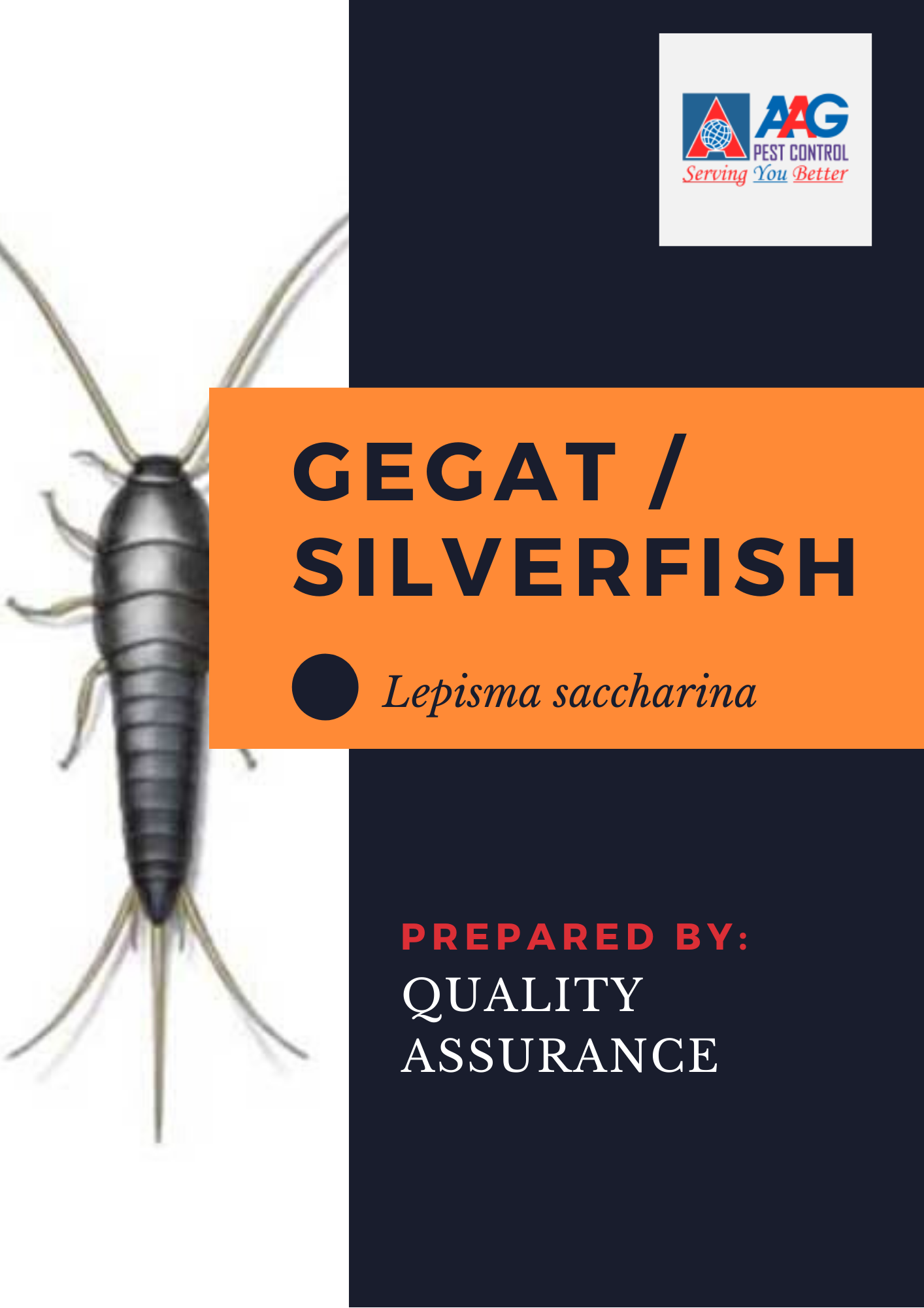 Silverfish Cover.png